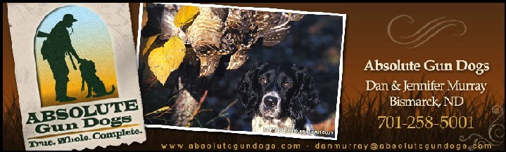 Absolute Gun Dogs-  Bismarck North Dakota