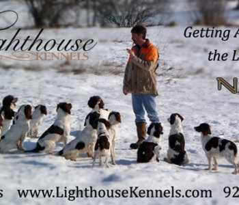 Lighthouse Kennels – Cambria, Wisconsin
