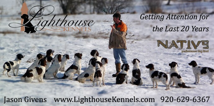 Lighthouse Kennels - Cambria, Wisconsin - English Springer