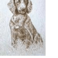 Southern California Sporting Spaniel Club