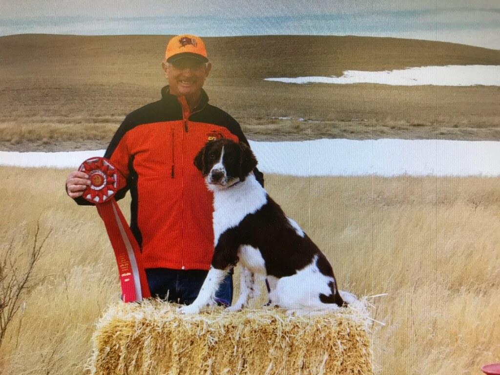 Stud Dogs - English Springer Spaniel Field TrialsEnglish