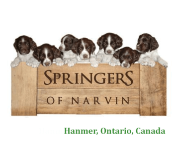 Springers of Narvin  Hanmer, Ontario, Canada