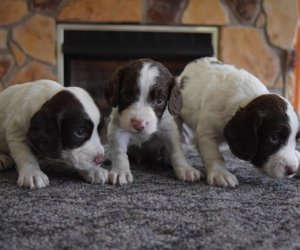 Shadow Valley Tober  X Shadow Valley Gracie May