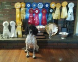 """FTCh AFTCh Thistle's Brambles and Briars MH """"Briar"""" X FC Buccleuch Domina """"Zoe"""""""