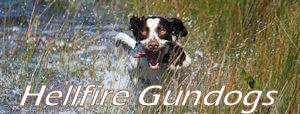 Hellfire Gundogs – Fairmont Springs, Montana