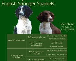 "Breaking Cattails Rigley ""Rigley"" X FC Whisky Rivers Cisco Kid  ""Cisco"""